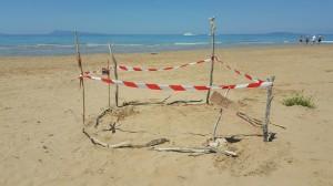 Riesenschildkröte Caretta Carette legt ihre Eier in Nordkorfu